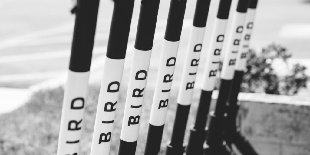 bird-scooter-closeup