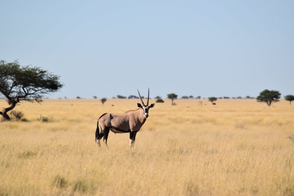 south-africa-animals